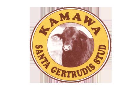 Kamawa Santa Gertrudis Stud